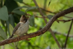 most birds are found in deep foliage