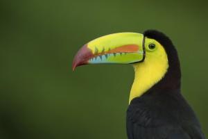Costa Rica album Wild Voyager