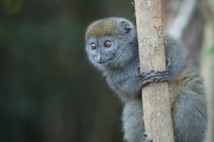 Wild Voyager Madagascar Gallery