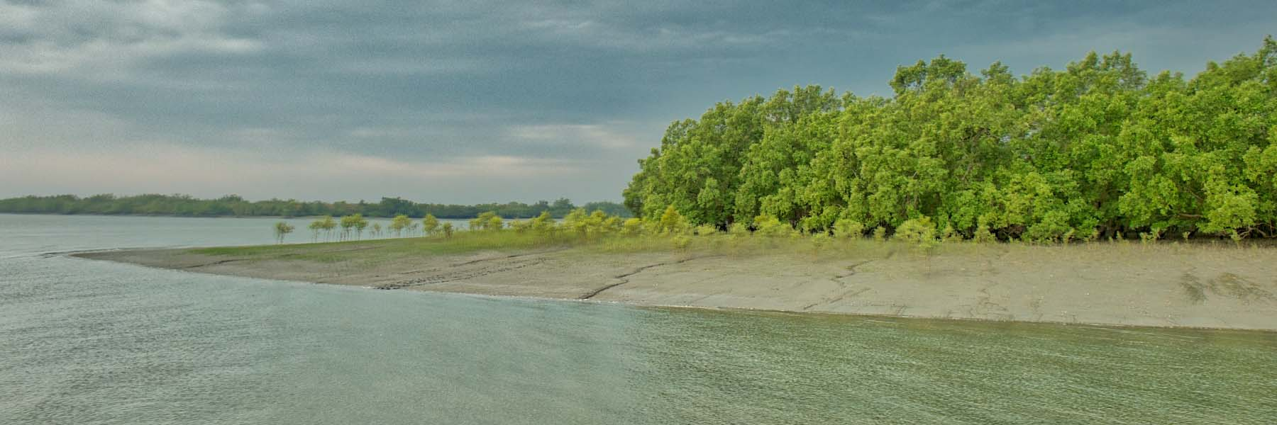 Visit the best Mangrove forests in the world