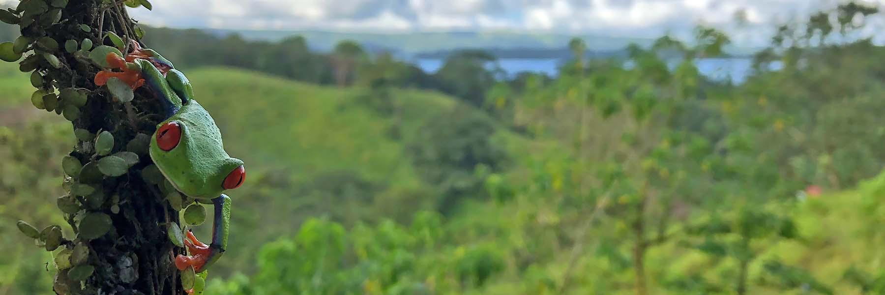 birding tours to costa rica
