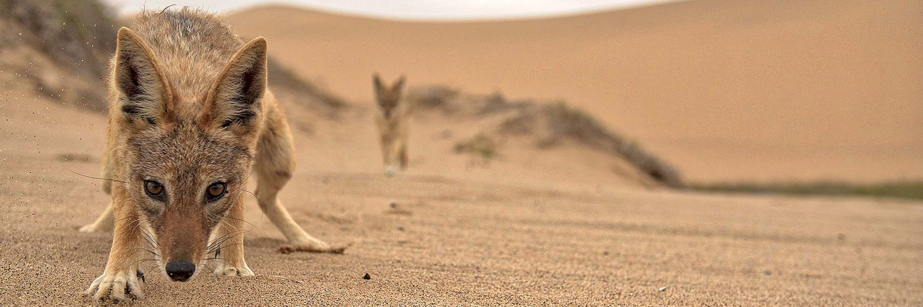Discovery of Namibia