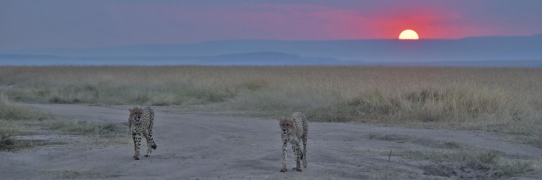 Highlights of Kenya