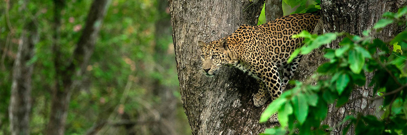 Kabini Nagarhole National Park