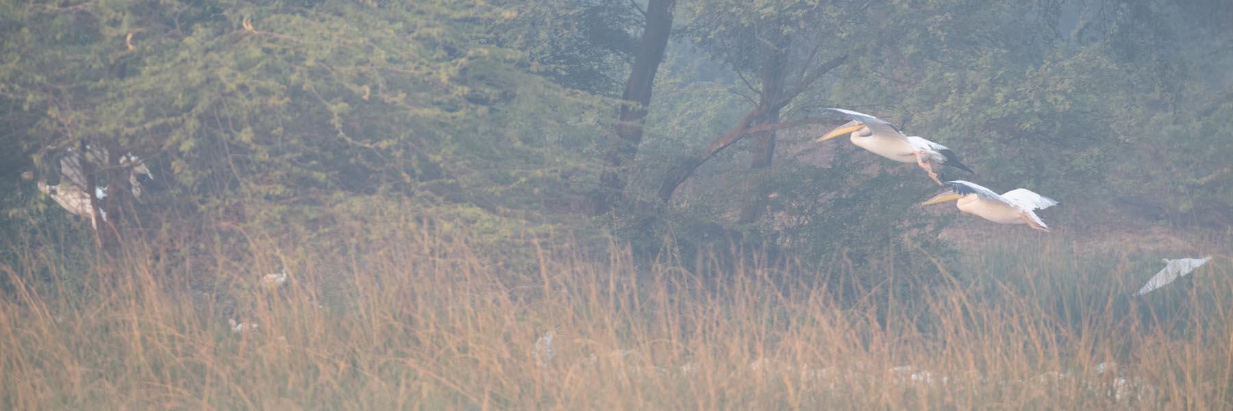 Jamnagar Birding