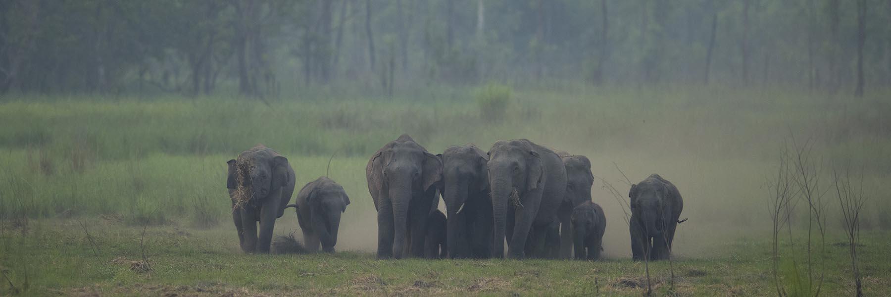 Dudhwa National Park