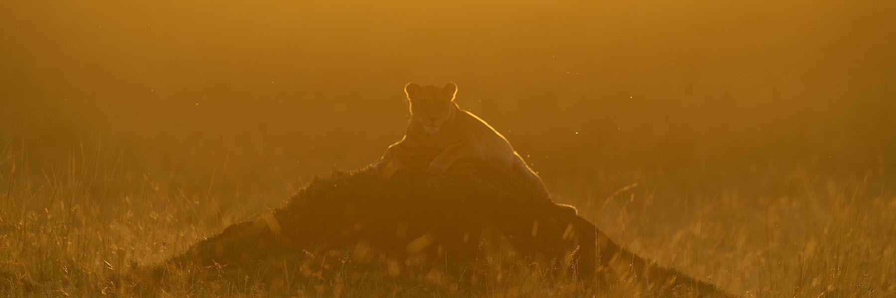 Masai Mara experience