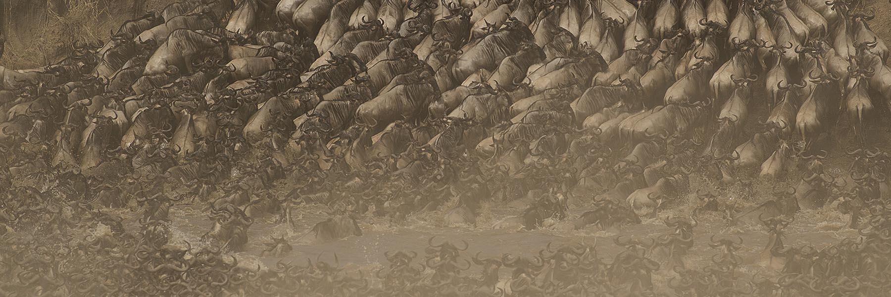Masai Mara migration experience