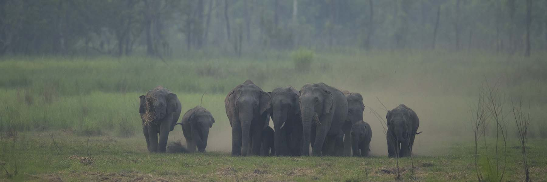 Elephant safaris in India and Africa