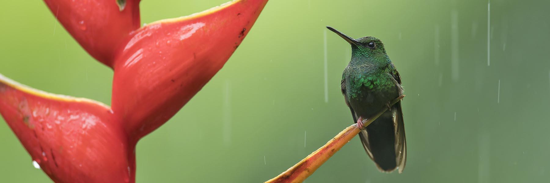 Costa Rica Classic Birding