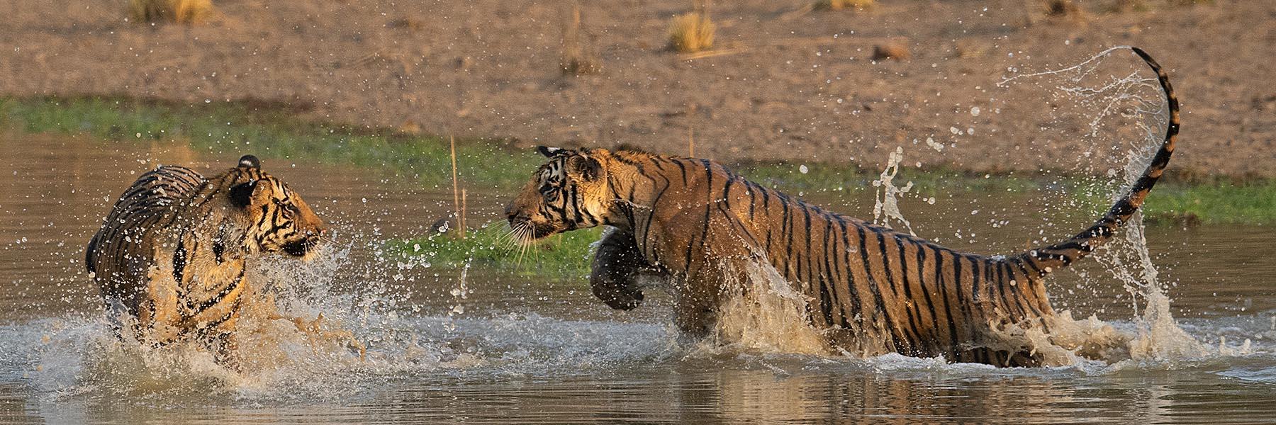 Tiger Trails