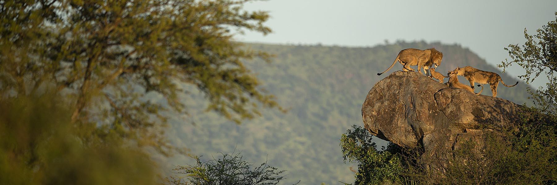 Serengeti and Ngorongoro