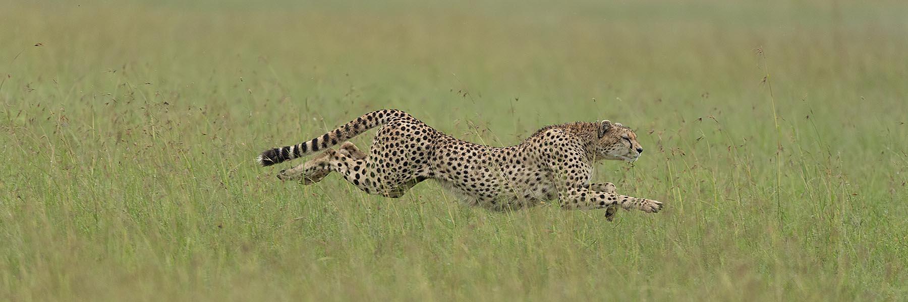 Manyara, Serengeti, Ngorongoro