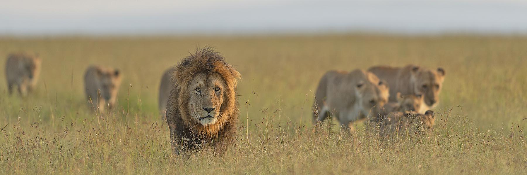 Mara, Serengeti, Ngorongoro
