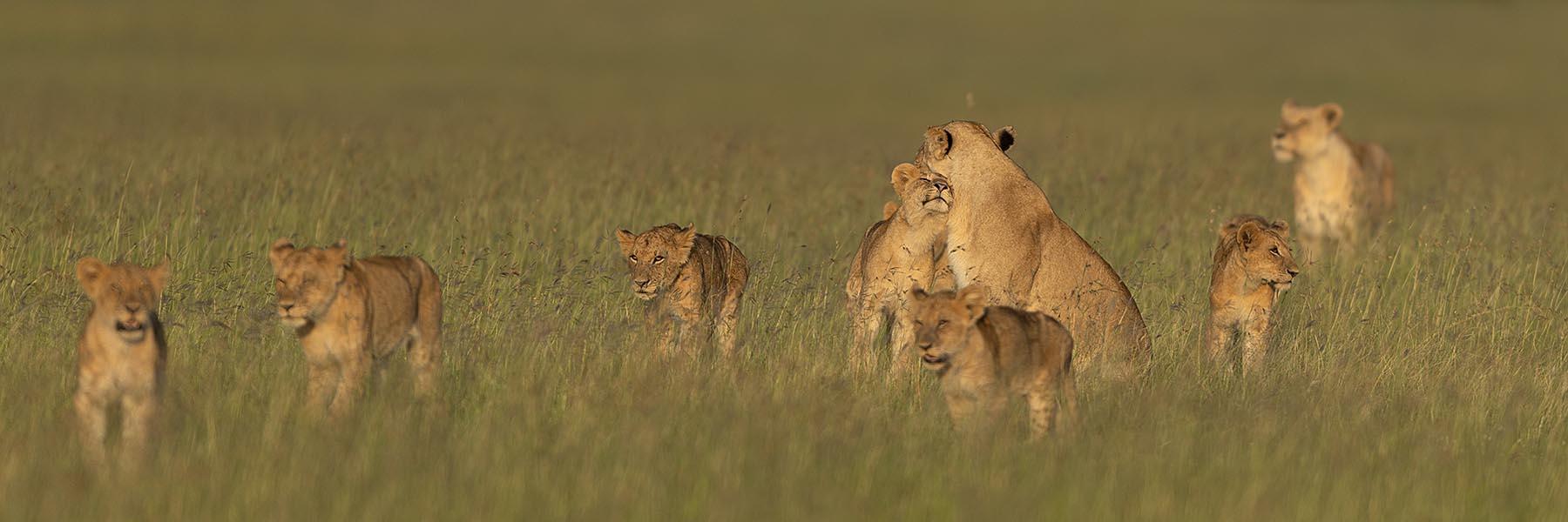 Masai Mara Luxury