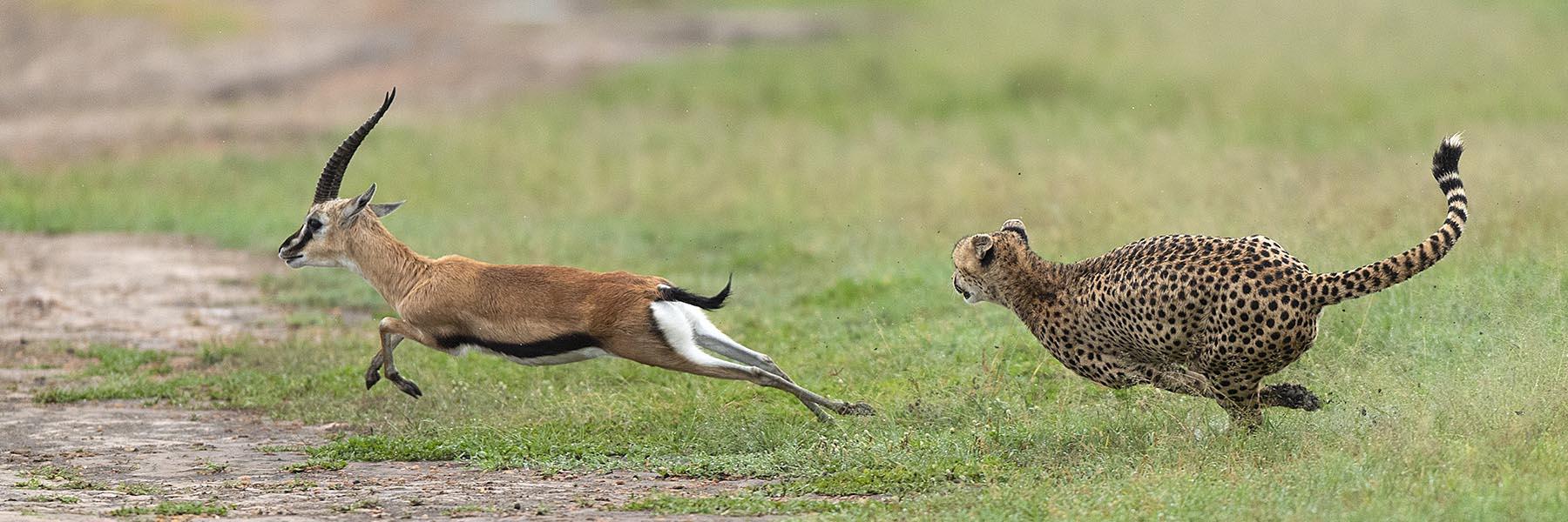 North Kenya and The Great Rift Safari