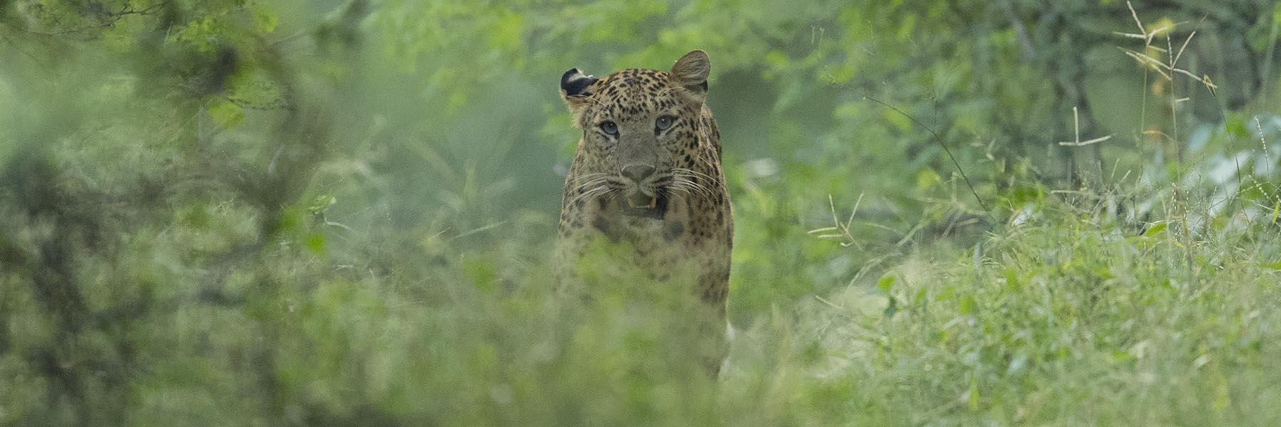 Jaipur Jhalana Safari Park
