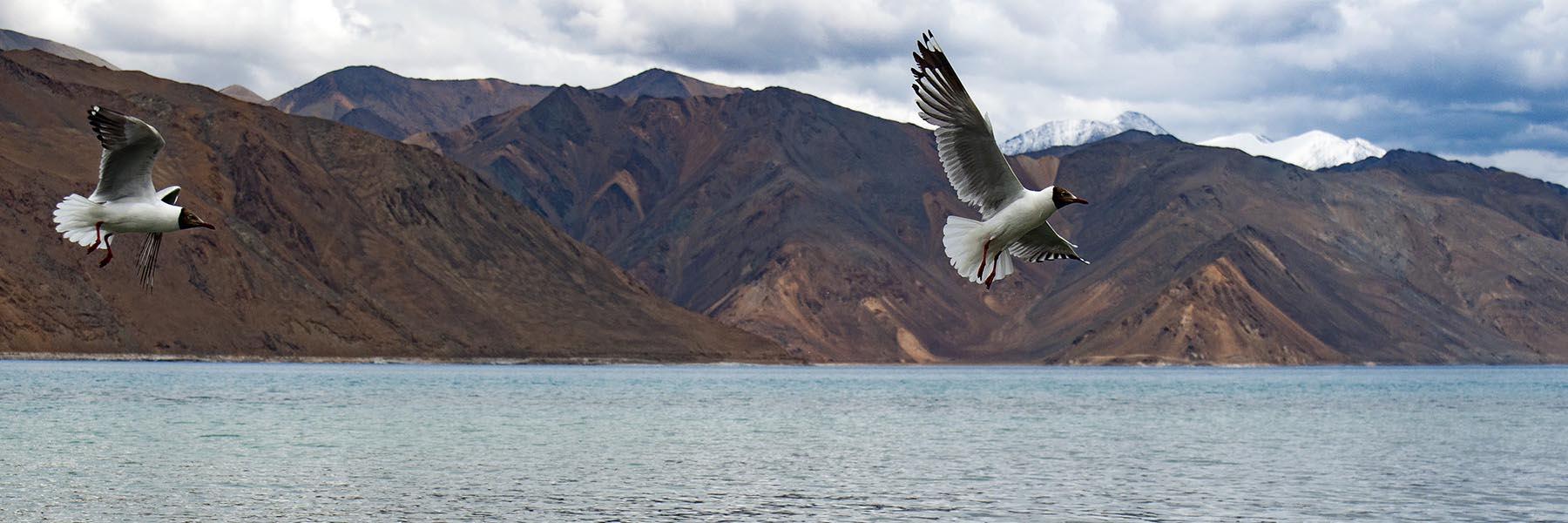 Ladakh Birding and Wildlife