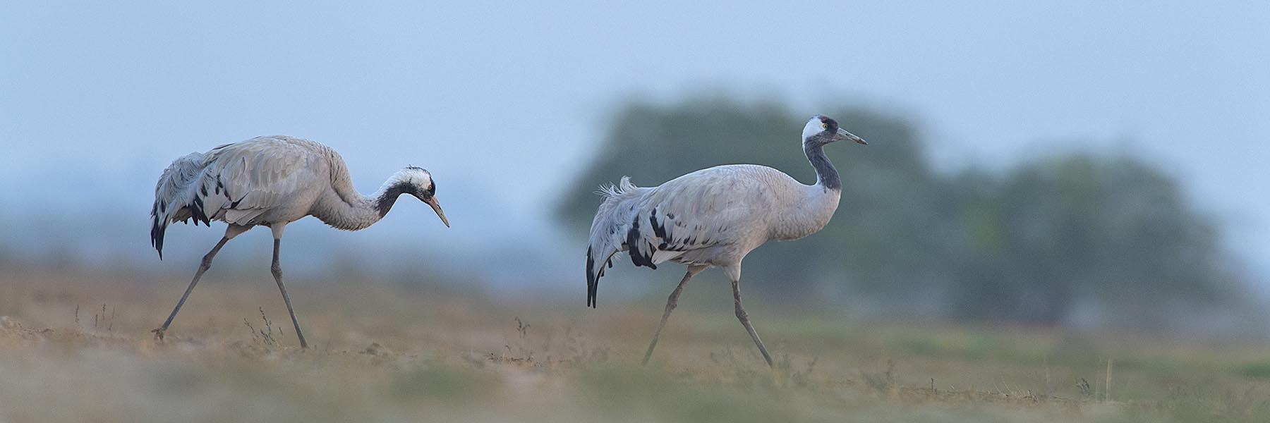Gujarat Wildlife