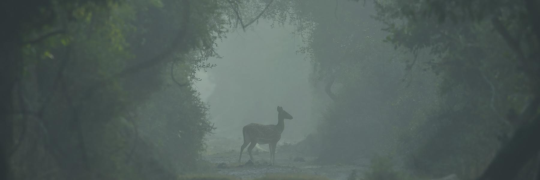 North India Winter Wildlife