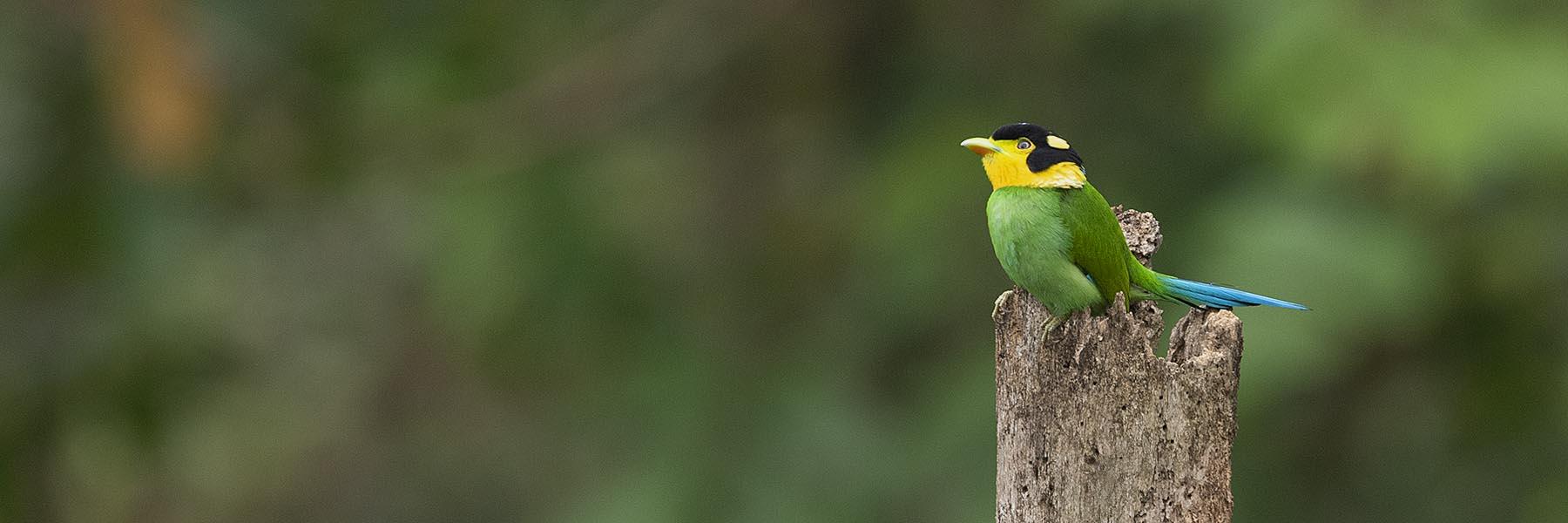 Sikkim & West Bengal Birding