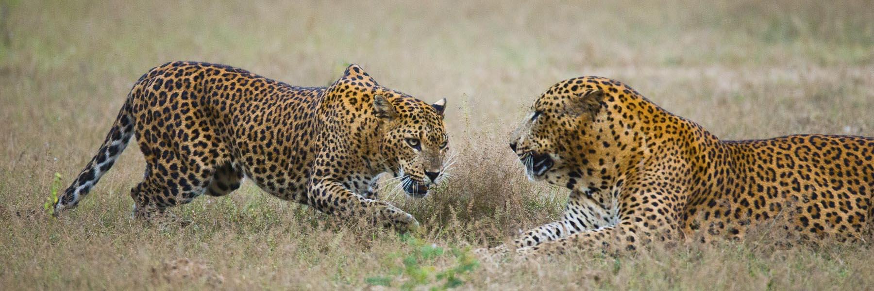 Highlights of Sri Lankan Wildlife