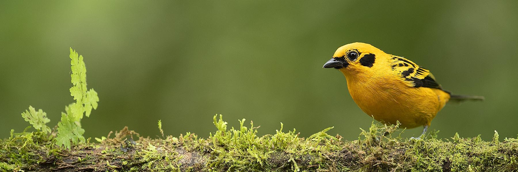 Ecuador Bird Photography Tour
