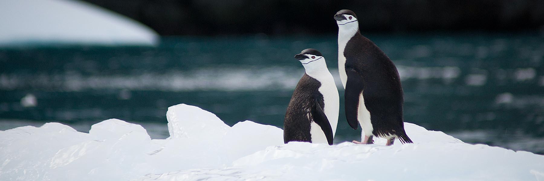 Antarctica, Chilean Fjords & Falklands