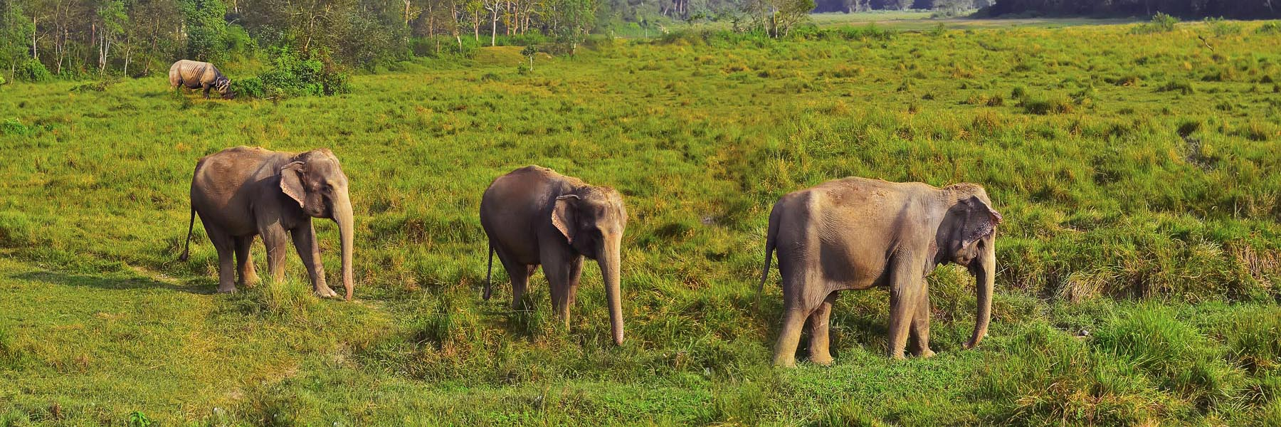 Classic Nepal with Wildlife