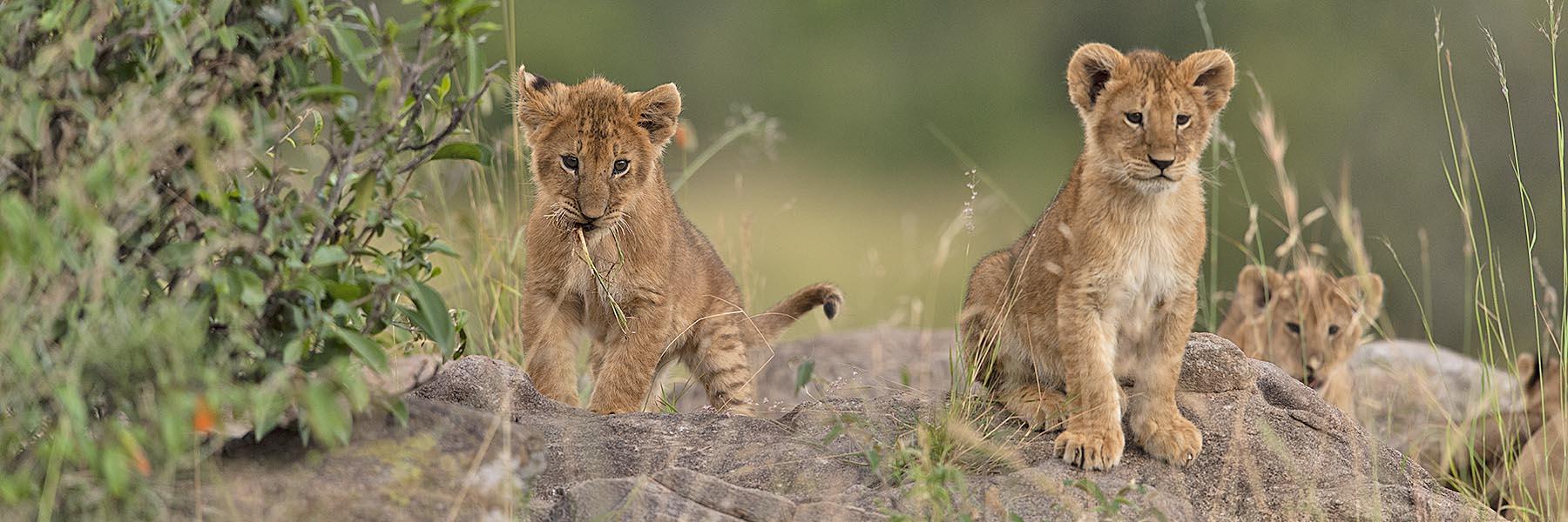 Luxury Train and Wildlife