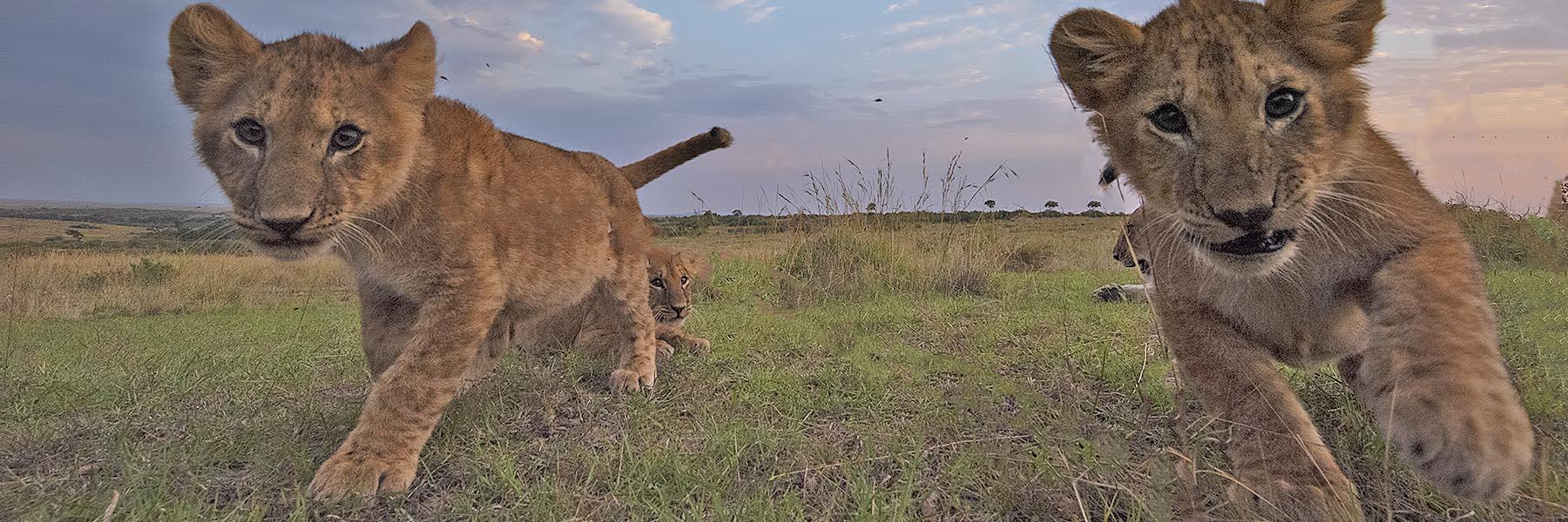 Kenya Wildlife Experience