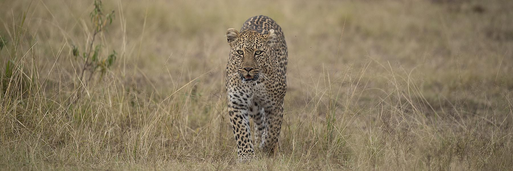 Best of Kenyan Wildlife