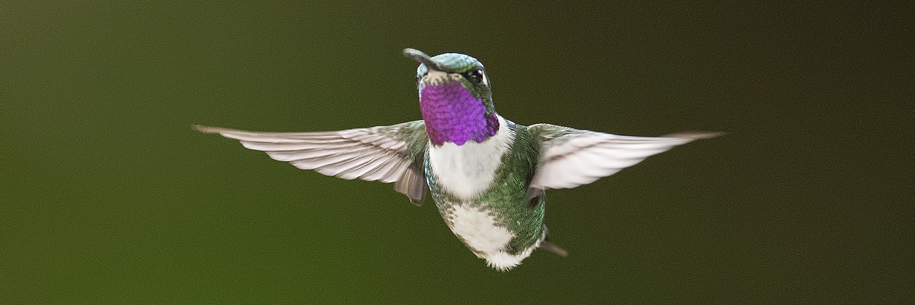 Birding tours around the world