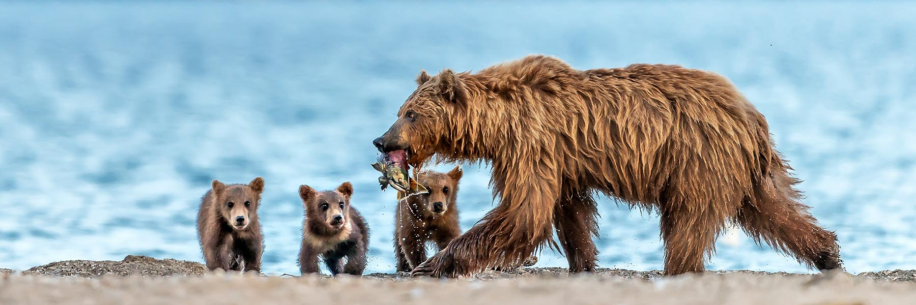 Bear expedition tours