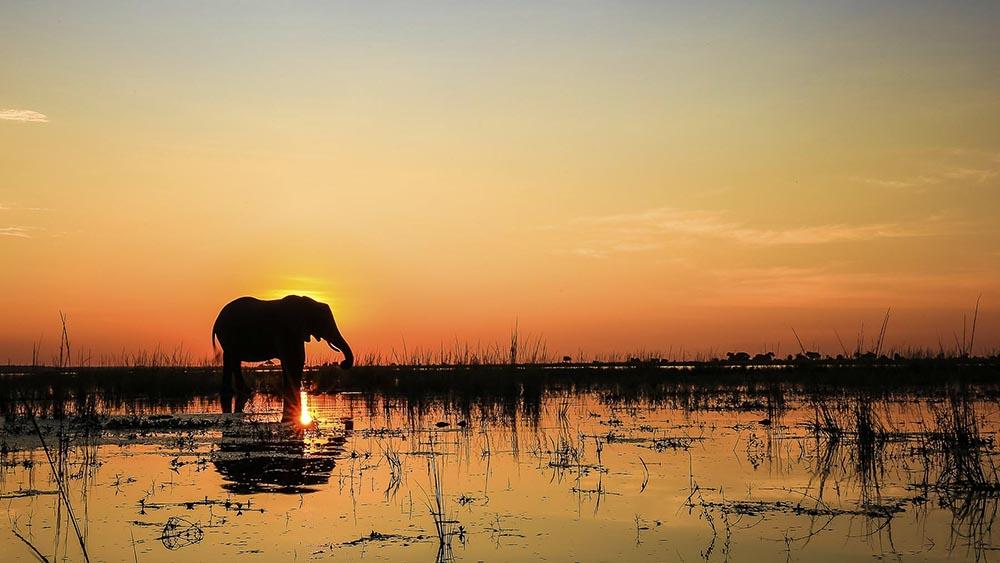 South African Elephants at Kruger