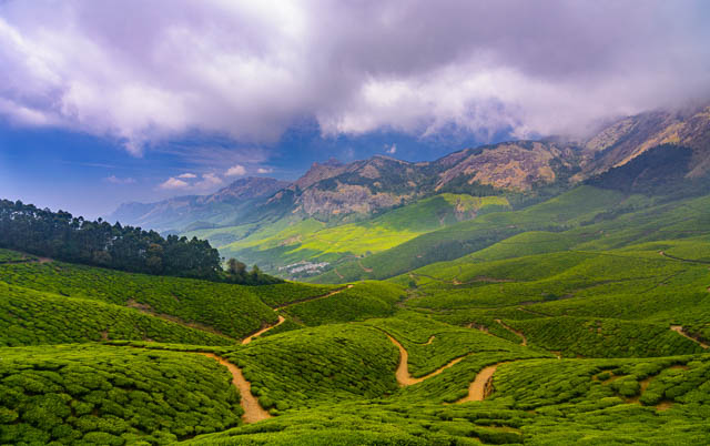 valley in kulukumalai in munnar, kerala