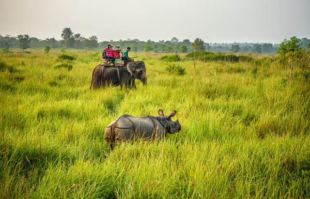 tourists watching and photographing a rhino from the back of an elephant in chitwan national park, nepal