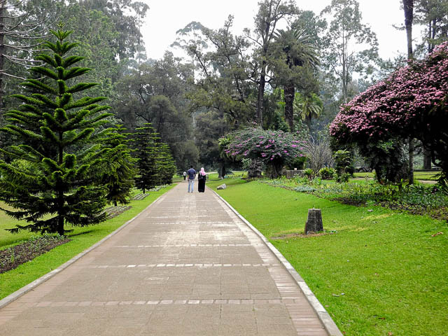 path inside victoria park in nuwara eliya, sri lanka
