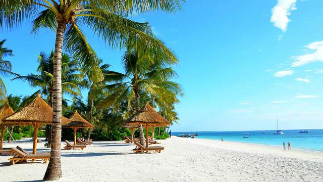 palm trees and small sheds on white sand beach on zanzibar islands, tanzania