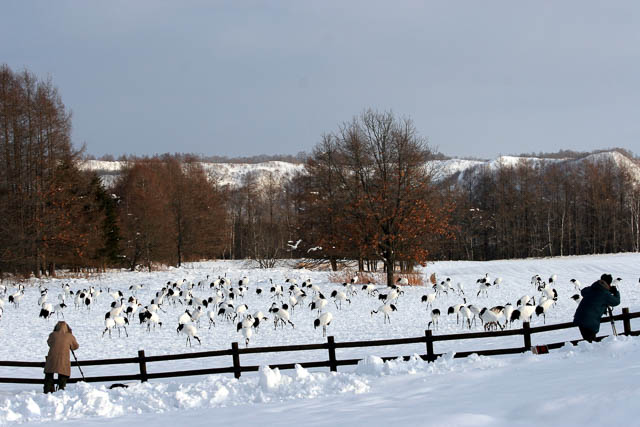 photographers infront of snow covered red crowned crane sanctuary in hokkaido, japan