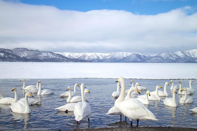 swan lake in hokkaido, japan