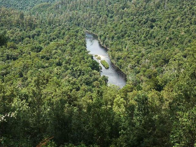 water body in tarkine forest reserve