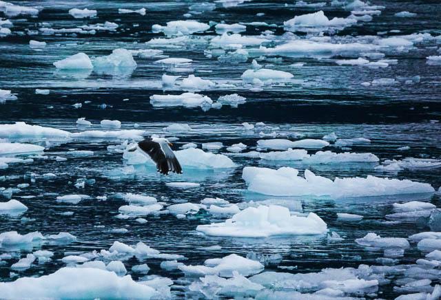 wildlife at falkland island in antarctica