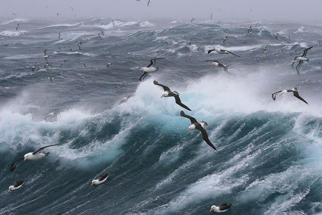 south georgia wildlife on ocean waves