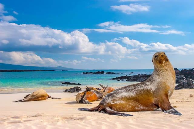 sea lions basking under the sun in the galapagos islands