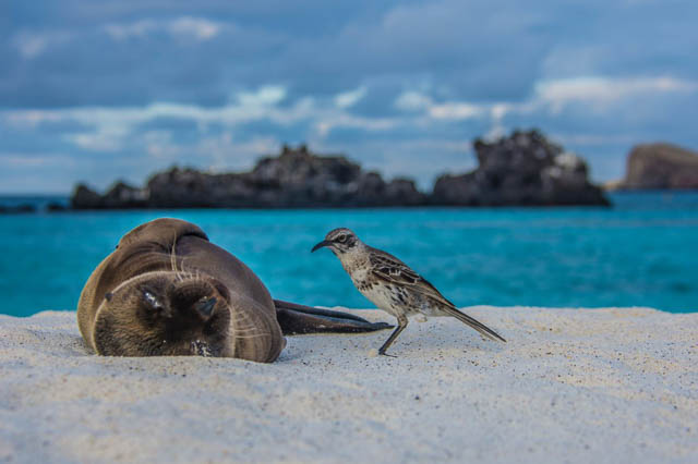 sea lion with a bird on a beach in galapagos islands