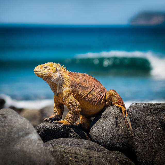 wildlife in galapagos islands
