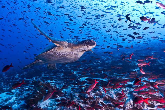 underwater wildlife in galapagos islands