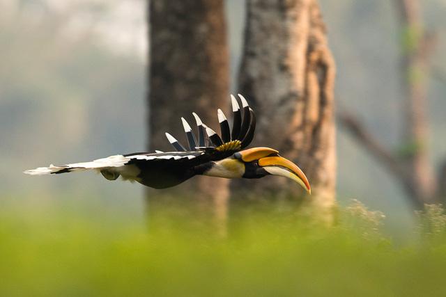 birding at kaziranga national park india