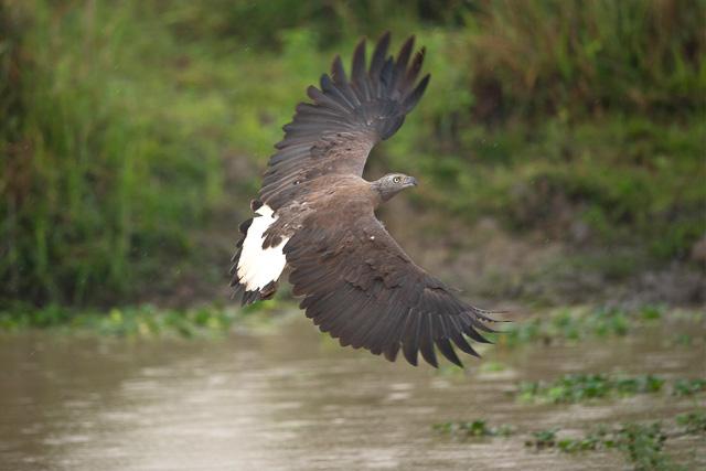 birds at kaziranga national Park India